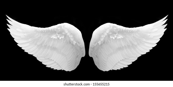 White wing on Black background