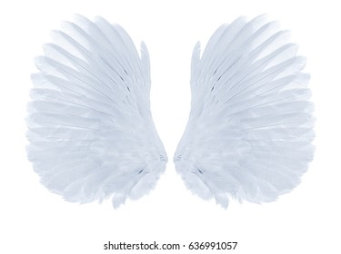 white wings of bird on white background