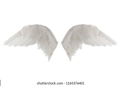 white wings isolated on white background