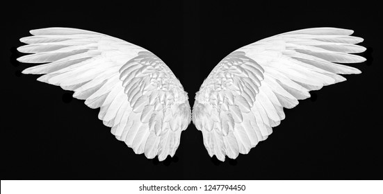 white wings isolated on black background