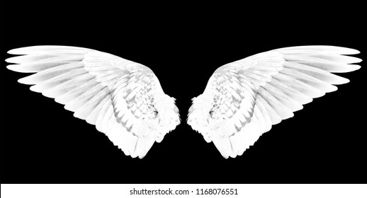 white wings on the black