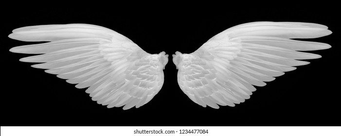 white wings on black background
