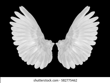 white wings on black blackground