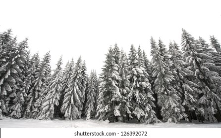 white winter forest - white background