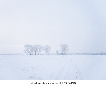 White winter landscape. Lonely trees stand in the field. Gloomy winter day