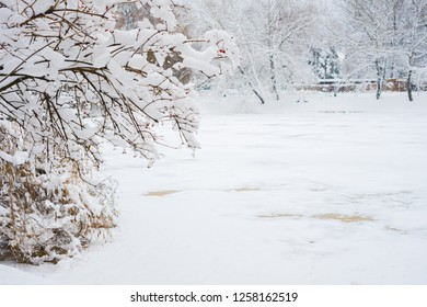 White winter landscape. Photography of pond on the forest. beautiful wild garden, with lots of snow-covered trees and shrubs. Cloudy and overcast day. Freezing weather.