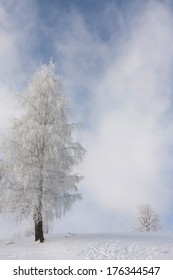 White winter landscape with trees and clouds