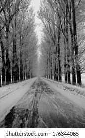 White winter landscape with trees on the road side