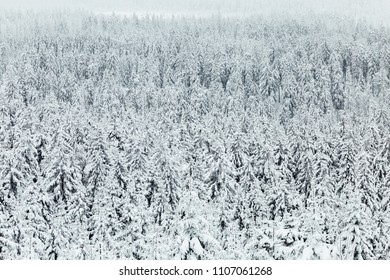 White Winter Splendour - The Harz Forest Landscape