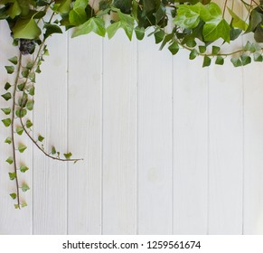 White wood background with green ivy branches. View with copy space