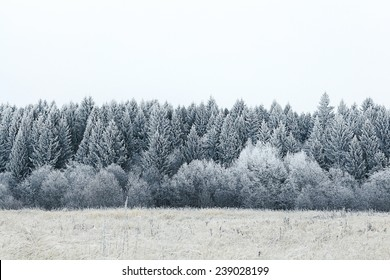 white wood covered with frost frosty landscape