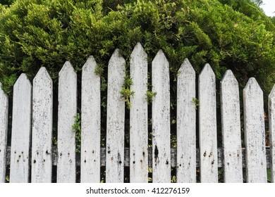 White wood wall near green tree