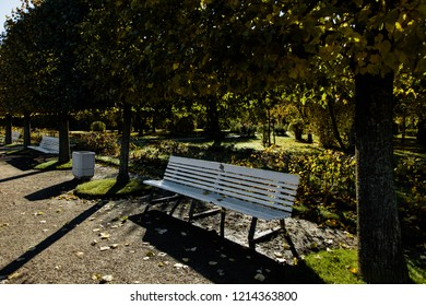 White wooden bench in the garden. White bench under a tree on a sunny day.