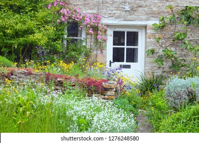 White wooden doors in a charming English country cottage with front garden full of flowers in bloom, pink rose, fig tree climbing the stone wall .