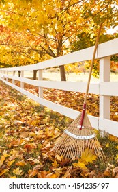 White wooden fence, bamboo rake and yellow maple leaves in autumn. Fall season lawn & garden work chores.