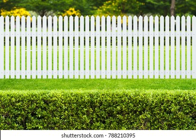 White wooden fence and Green bush in the park. Bushes with green fresh foliage in a garden