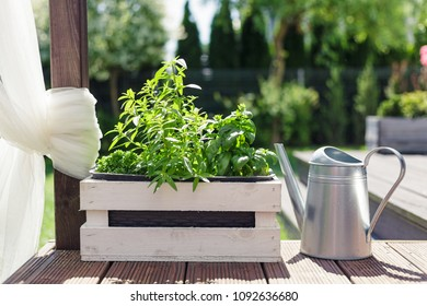 White wooden pot with green herbs on a wooden terrace