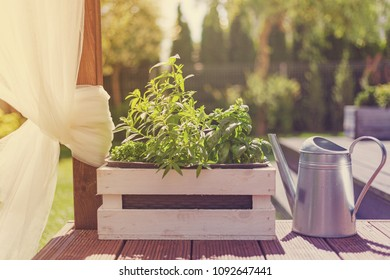 White wooden pot with green herbs on a wooden terrace, split toning colors