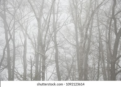 white woods in winter low contrast