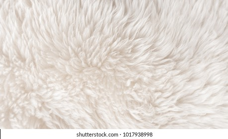 White wool texture background, cotton wool, white natural sheep wool, beige fluffy fur, fragment white carpet, close-up light wool with detail of woven pattern, factory fabric material with a twist