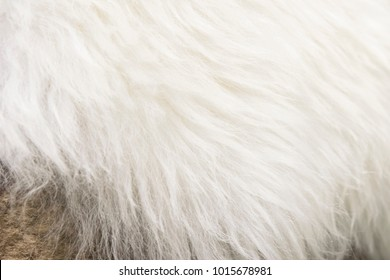 White Wool Texture Background Natural Fluffy Fur Sheep Skin Apart Of Luxury