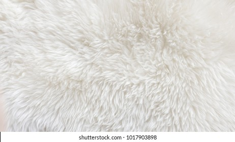 White wool with white top texture background, light natural sheep wool, white seamless cotton, texture of fluffy fur for designers, close-up fragment white wool carpet