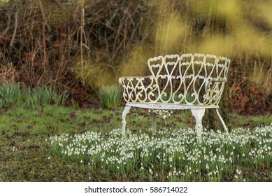 white wrought iron seat and snowdrops