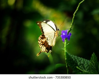 White and yellow butterfly on a blue flower