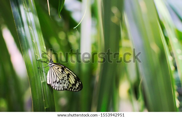 White and yellow butterfly on a leaf