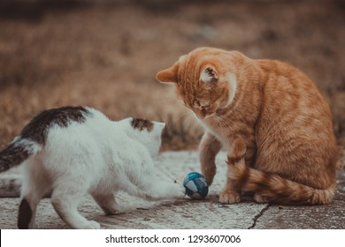 White and yellow cats playing with blue ball on the grass.