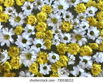 white and yellow daisy flowers on the water for pattern background