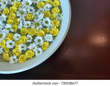 white and yellow daisy flowers with some space for text