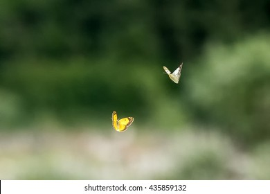 White and yellow flying butterfly on grass background