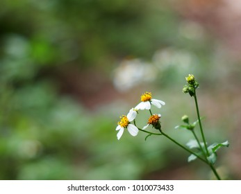 white yellow tiny wild grass flowers in green meadow under summer sunlight on good weather day selective focus very shallow depth of field for blur backdrop background picture