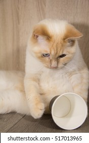 white young cat with a Cup of coffee playing, tired, drinks from a Cup, knocked over the empty glass in the morning before work