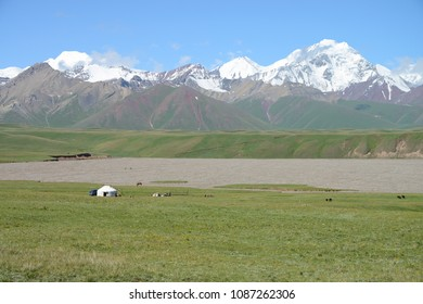 White Yurts, free running horses and snow covered Pamir mountains in the background, Kyrgyzstan