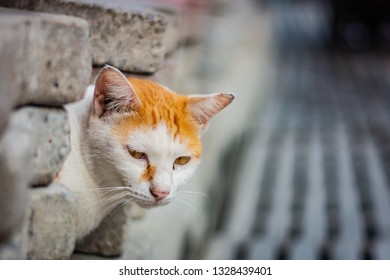 White-and-ginger cat looks from behind a gray wall and looks ahead, cat's yellow eyes, gray blurred background