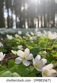 Whiteflowers growing on the edge of forest
