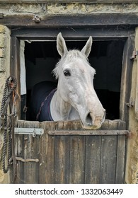white/gray horse looking out of a stable door.