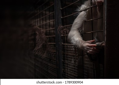 White-haired monkey in locked of iron mesh cage using hands attempt to unlock the prison door with lowlight area. Selective focus at index finger and copy space.
