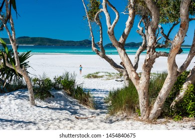 Whitehaven Beach, Whitsunday Island, Queensland, Australia - July 15 2015: Looking through paper bark trees on Whitehaven Beach, tourists on the sand