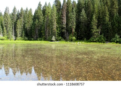 Whitehouse Pond, Clearwater National Forest, Idaho, USA