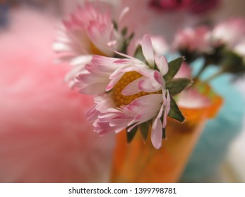 White-pink Common Daisy flowers in an orange bottle with colorful fur balls in the background 2019