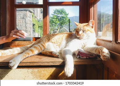 A white-red cat sleeps resting his head on window