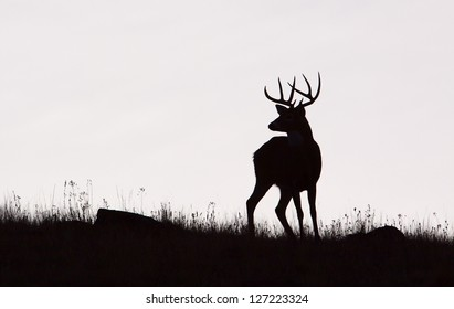 Whitetail Buck Deer Stag, black & white silhouette, Midwestern Deer Hunting the Midwest