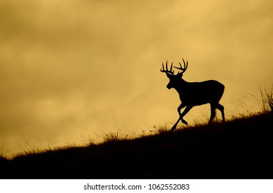 Whitetail buck running along a ridge top during deer hunting season, silhouetted against the sky