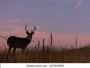 Whitetail Buck Silhouetted in the Sunset