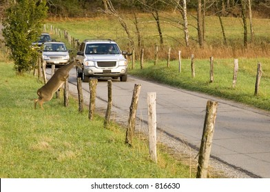 Whitetail deer jumps fence in front of cars (possible car-deer collision)