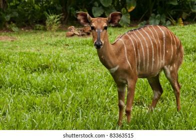 whitetail deer standing in grass field