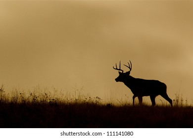 White-tailed Buck Deer silhouette, running on ridge top at sunrise / sunset, Flathead Indian Reservation, Montana; whitetail / white tail / white-tail / white tailed / whitetailed